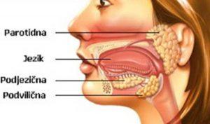 Ilustracija anatomskog prikaza pljuvačne žlezde