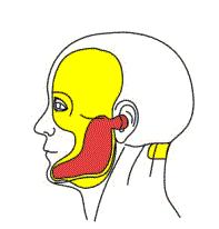 ilustracija ljudskog zgloba obojenog u crven